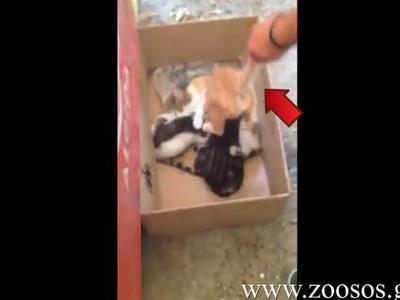 Πάτρα: Μαθητές κακοποιούν γατάκι και το ...