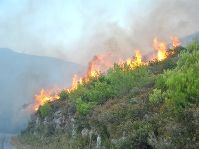 Φωτιά και στη Λακωνία