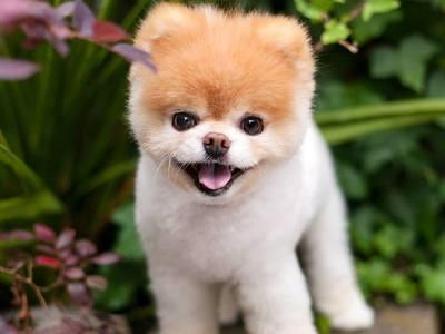Πέθανε από θλίψη το πιο χαριτωμένο σκυλάκι του κόσμου!