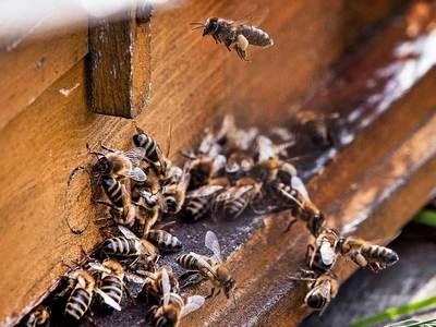 Οι Μελισσοκόμοι κάνουν τον απολογισμό του πανελλήνιου συνεδρίου τους