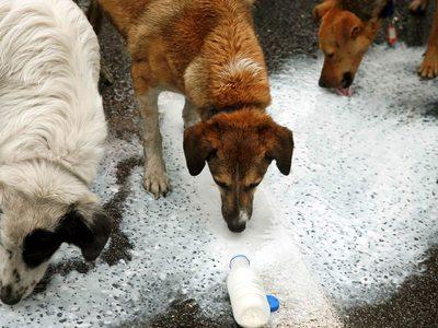 Ηλεία: Έριξε φόλα σε δύο σκυλιά