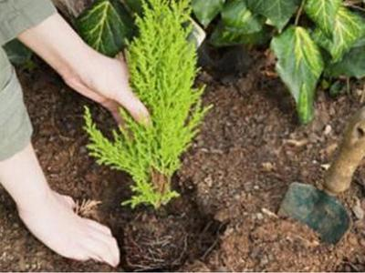 Πάτρα: Αλλάζει όψη αύριο η Κανελλοπούλου - Ολοκληρώνεται η δενδροφύτευση