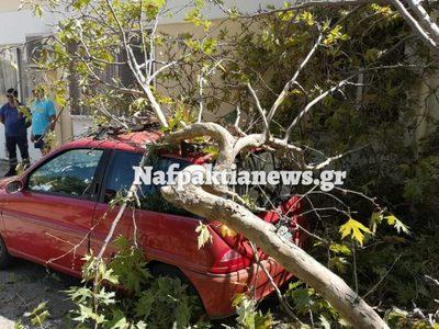 Ναύπακτος: Το κλαδί πλάκωσε το αυτοκίνητο - ΒΙΝΤΕΟ