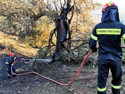Φωτιά στο Δασύλλιο της Πάτρας: Στάχτη δύ...