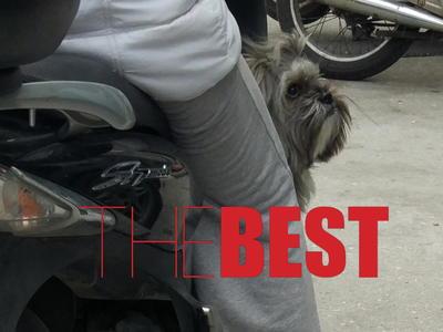 Το μικρό σκυλάκι που απόλαυσε τη βόλτα στην Πάτρα