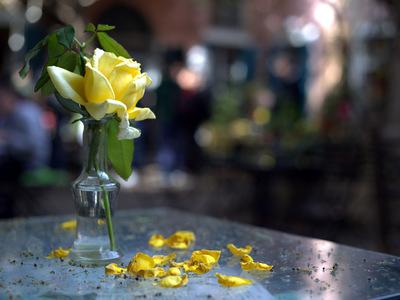 Το λουλούδι στο βάζο της καραντίνας