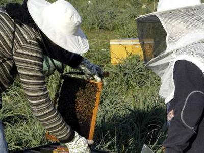 Ηλεία: Νεκρός 55χρονος από επίθεση μελισσών!