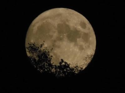 Το μαγικό φεγγάρι του ελαφιού - Η πανσέλ...