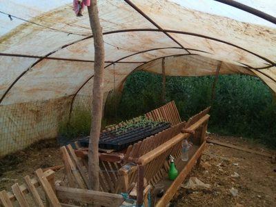 Ο στάβλος με το χασίς ...Συνελήφθησαν καλλιεργητές στην Αιτωλοακαρνανία
