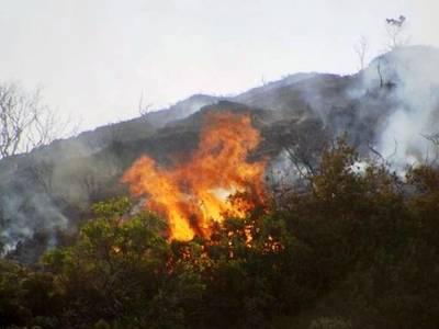 Τώρα: Πυρκαγιά σε δασική έκταση στην Ηλεία