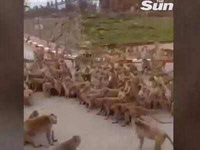 «Διαδήλωσαν»... πίθηκοι σε κεντρικό δρόμ...