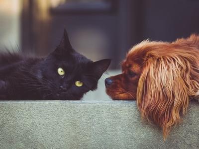 Σκύλοι - γάτες...σημειώσατε ένα!