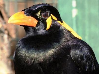 παρασυρθεί από μεγάλο πουλί
