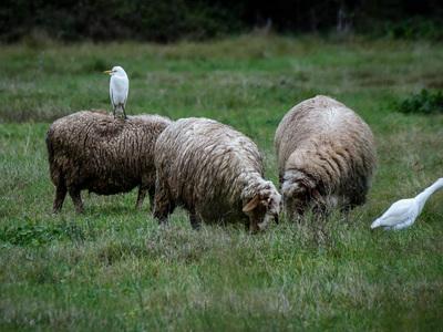 Περιφέρεια: Οδηγίες προς κτηνοτρόφους γι...