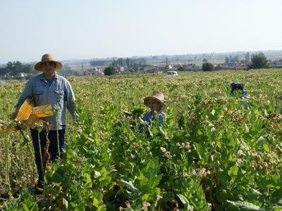 ΜέΡΑ25: Σε απελπιστική κατάσταση οι αγρό...