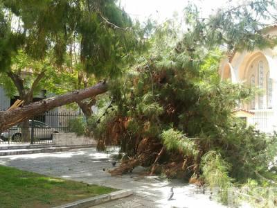 Έπεσε δέντρο στον Άγιο Ανδρέα και από θαύμα δεν τραυματίστηκε κάποιος - ΦΩΤΟ