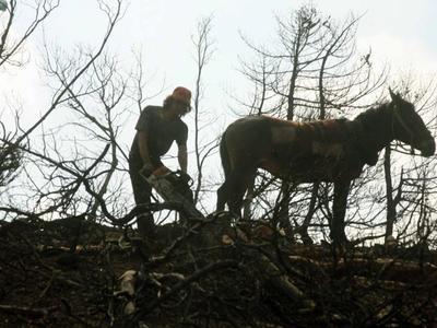 Περισσότερη και φθηνότερη ξυλεία φέτος στους κατοίκους των ορεινών περιοχών