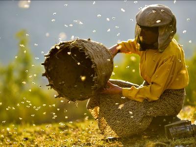 """Η υποψήφια για 2 Όσκαρ ταινία από τη Βόρεια Μακεδονία, """"Honeyland"""" θα βγει σε επιλεγμένες αίθουσες της χώρας μας"""
