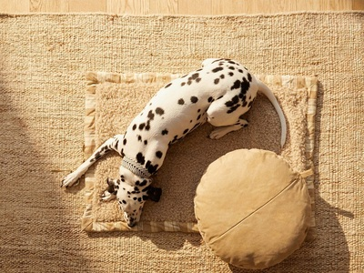 Σκυλίσια ζωή: Η pet collection των Zara ...
