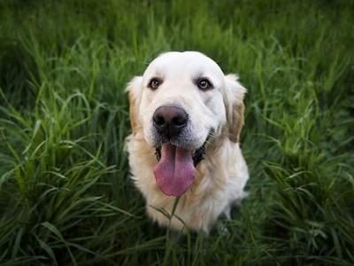 Δηλητηρίασε σκύλο μέσα σε περιφραγμένο αγρόκτημα