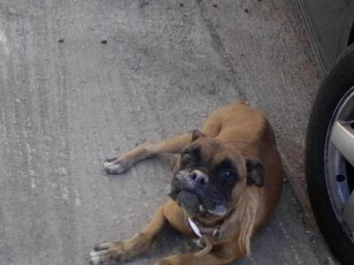 Πάτρα: Εντοπίστηκαν δύο καθαρόαιμα σκυλι...