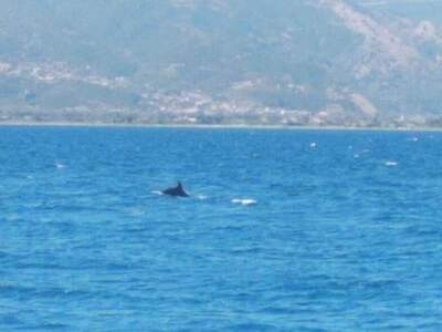 Εμφανίστηκαν ξανά δελφίνια στη Ροδινή