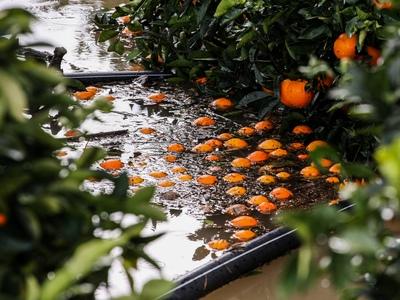 Μεγάλη καταστροφή στην Ηλεία! Τόνοι πορτοκάλια επιπλέουν στα...χωράφια - Εκκενώθηκαν σπίτια στην Ανδρίτσαινα - ΦΩΤΟ