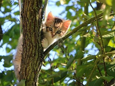 Πάτρα: Νεκρό το γατάκι που εγκλωβίστηκε ...