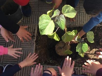Ένα δένδρο για την Ευρώπη! Το φύτεψαν οι μαθητές του 45ου δημοτικού  Πατρών στο προαύλιο του σχολείου τους-ΦΩΤΟ