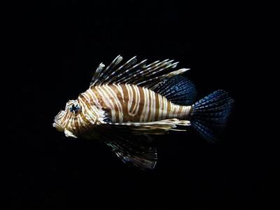 Ο ερωτικός χωρισμός πονάει και τα ψάρια