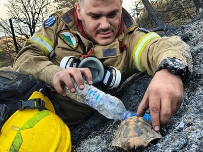 Αχαΐα: Η ΦΩΤΟ από τη φωτιά στη Δροσιά πο...