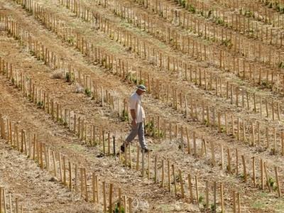 Με ερημοποίηση απειλείται η Ελλάδα - Στο...