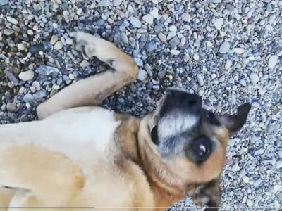 Φωτιά Ζήρια: Σκυλάκος με εγκαύματα στο Λ...