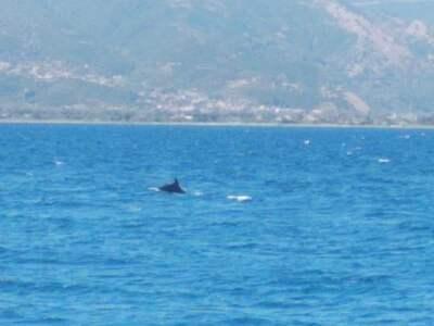 Βγήκαν... δελφίνια στην παραλία της Ροδινής! ΦΩΤΟ
