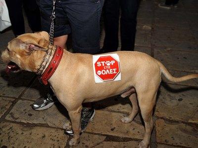Λεχαινά: Έριξαν φόλες σε σκύλους