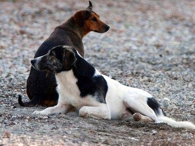 Βρήκαν στον Ριγανόκαμπο νεκροταφείο σκύλου- Του έχουν φτιάξει κανονικό μνημείο
