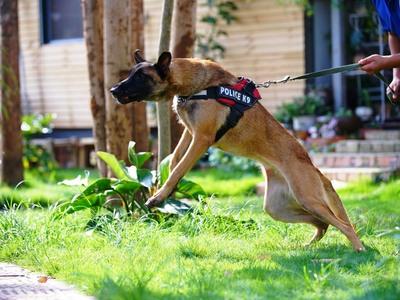 Την λήστεψαν με την απειλή... μεγαλόσωμου σκύλου