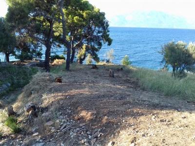 Οικολογική Κίνηση Πάτρας: Aπειλές και μηνύσεις καταπατητών κατά δασικών υπαλλήλων!