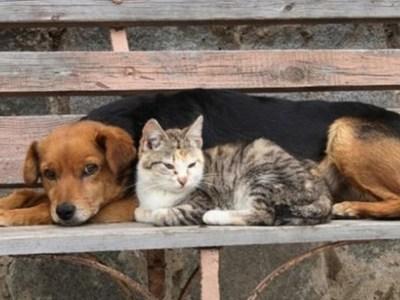 Βρείτε εδώ τη βεβαίωση μετακίνησης για τη φροντίδα των αδέσποτων ζώων