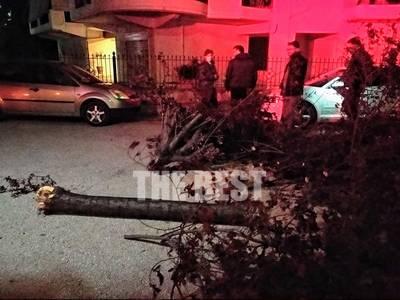 Πάτρα: Δένδρο έπεσε πάνω σε αυτοκίνητο - Άνεμοι με 100χλμ την ώρα!- ΦΩΤΟ