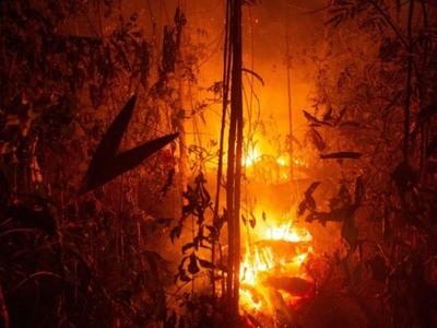 Η ζήτηση βοδινού και σόγιας υπαίτια για τις φωτιές στον Αμαζόνιο
