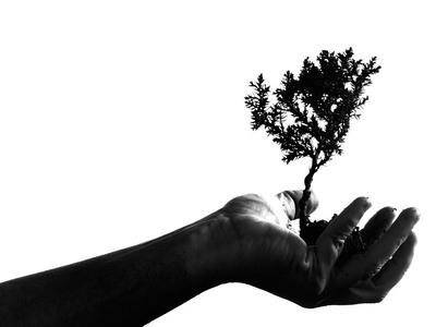 Πρέπει να φυτέψουμε 1 τρισεκατομμύριο δένδρα για να σώσουμε τον πλανήτη μας