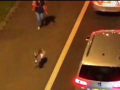 Κατσίκα σταμάτησε την κυκλοφορία - ΒΙΝΤΕΟ
