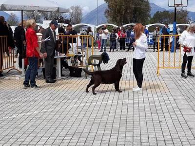 Έκθεση Μορφολογίας Σκύλων, Πάτρα 2019