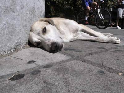 Κρέστενα: Κατηγορείται ότι μάζευε σκύλους για φύλακες αλλά τους άφηνε χωρίς νερό και φαγητό μέχρι να πεθάνουν
