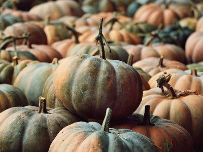 Οι κολοκύθες του φθινοπώρου: Τα είδη, οι...