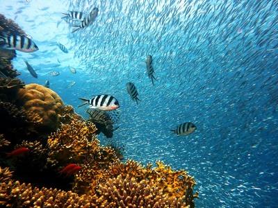 Πεθαίνουν τα κοράλλια στην Αυστραλία