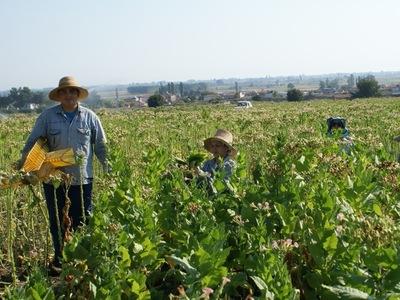 Ερχονται 5,36εκ. ευρώ για αγροτικές ενισχύσεις