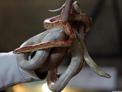 """Η άνοιξη ήρθε στην Πάτρα κι έπονται τα... φίδια - Ο... """"οφιόσαυρος"""" εξηγεί γιατί δεν πρέπει να πανικοβληθείτε"""