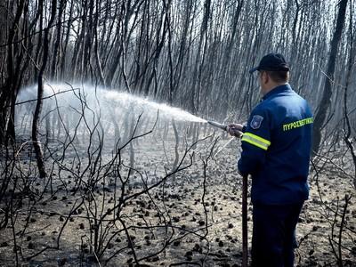 Φωτιά έκαψε και πάλι καλαμιώνες στην Στροφυλιά